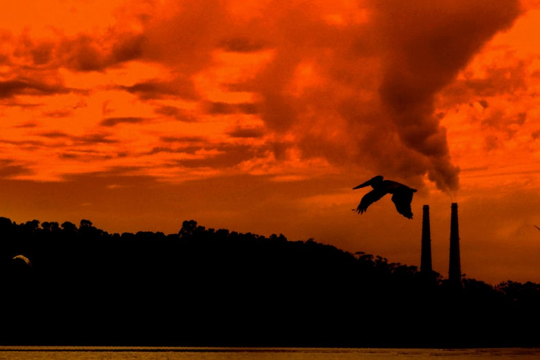 10 Environmental Losses To Start Fixing This Earth Day