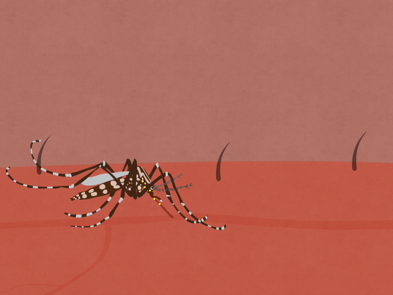 Watch: The Zika Virus Explained, In Three Minutes