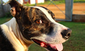 Shelters often mislabel dog breeds. But should we be labeling them at all?