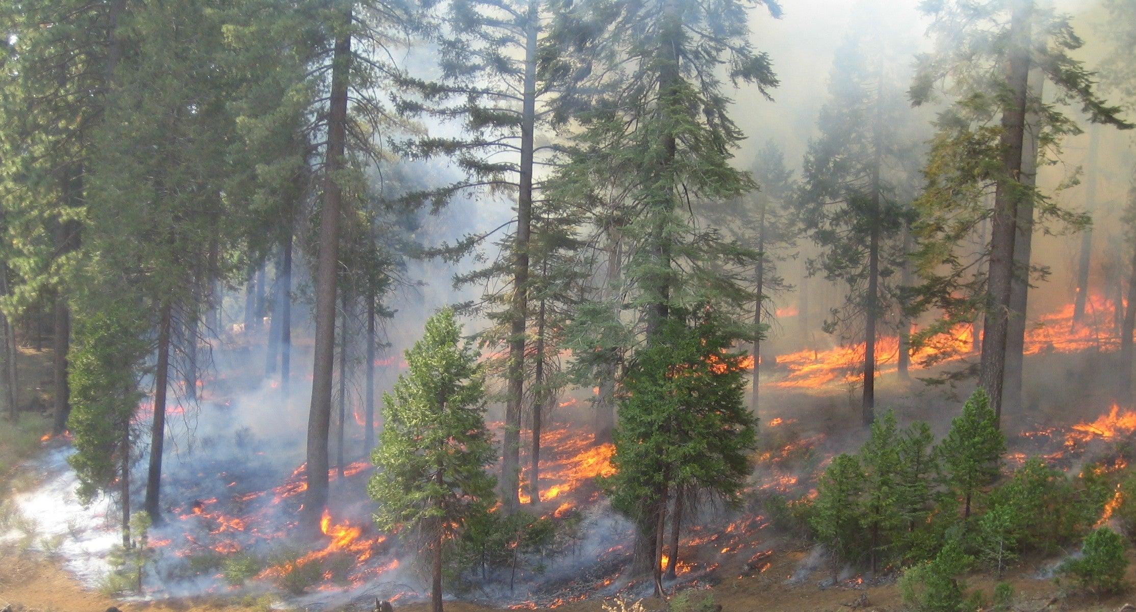 To Prevent Huge Forest Fires, Let Them Burn