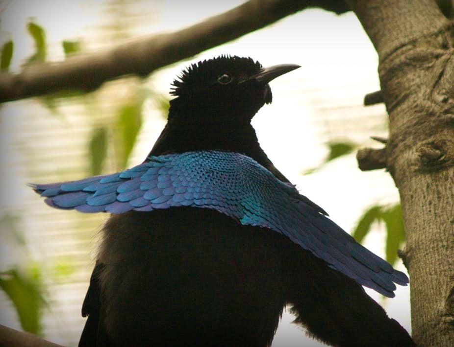 super black feathers