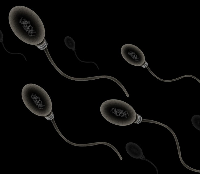 Chinese Scientists Turn Mouse Stem Cells Into Working Sperm Cells