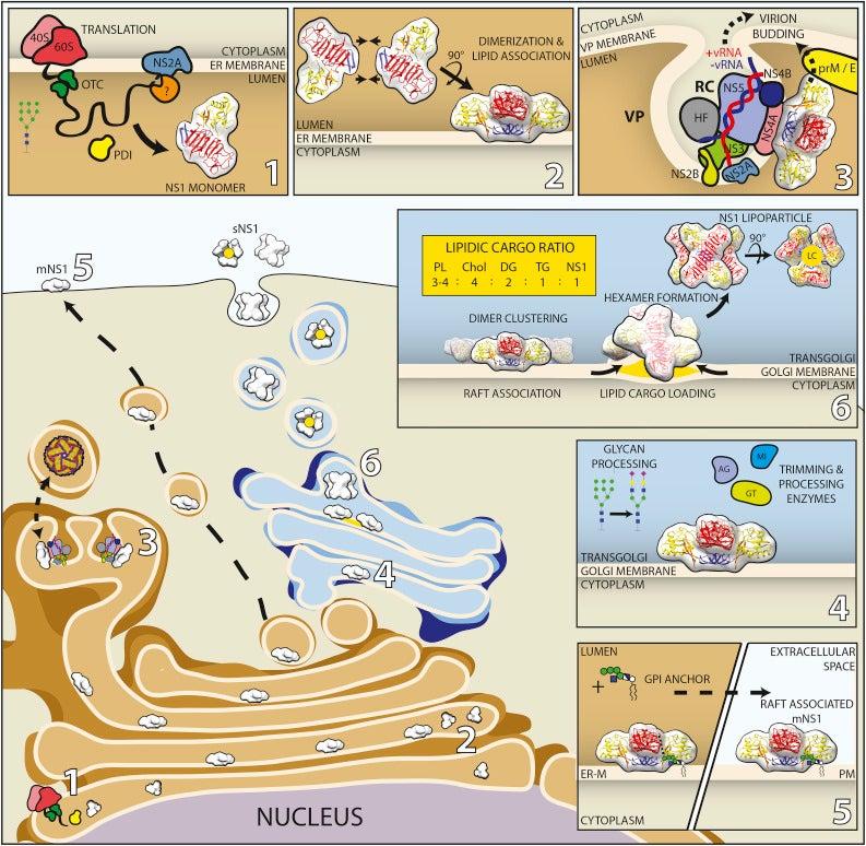 NS-1 illustration