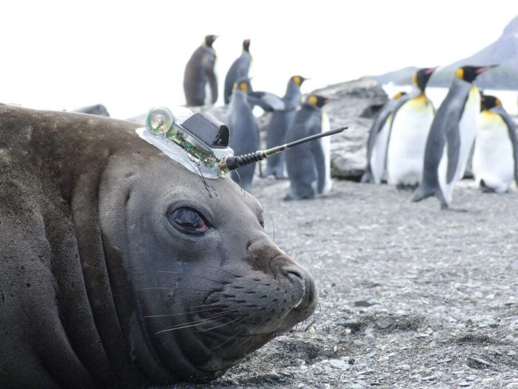 """Seal"