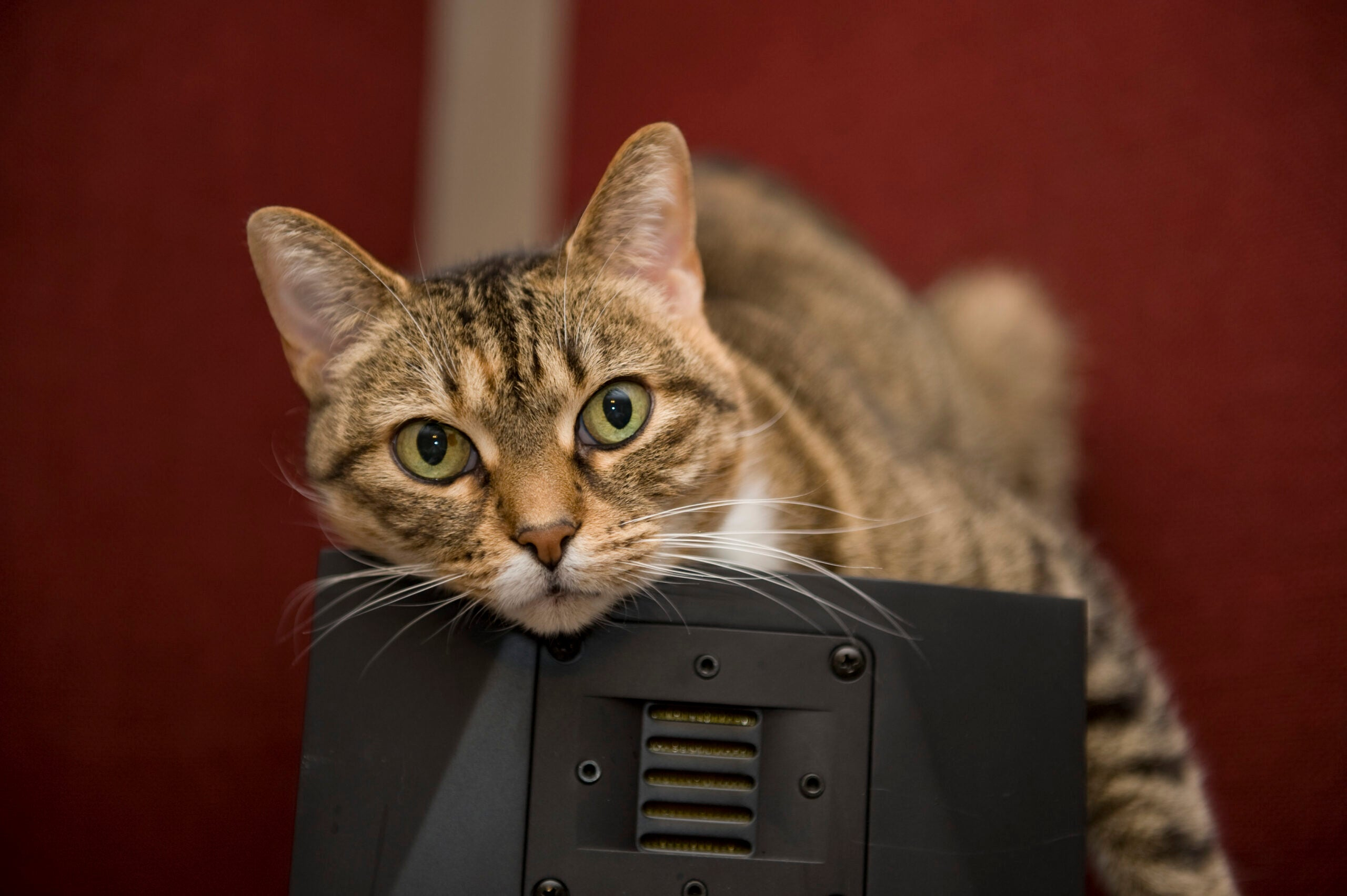 Now You Can Kickstart A Music Album Just For Your Cat