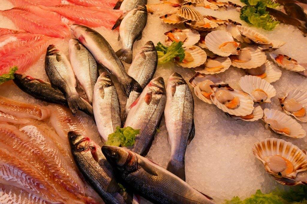 Fresh catch at a fish market.