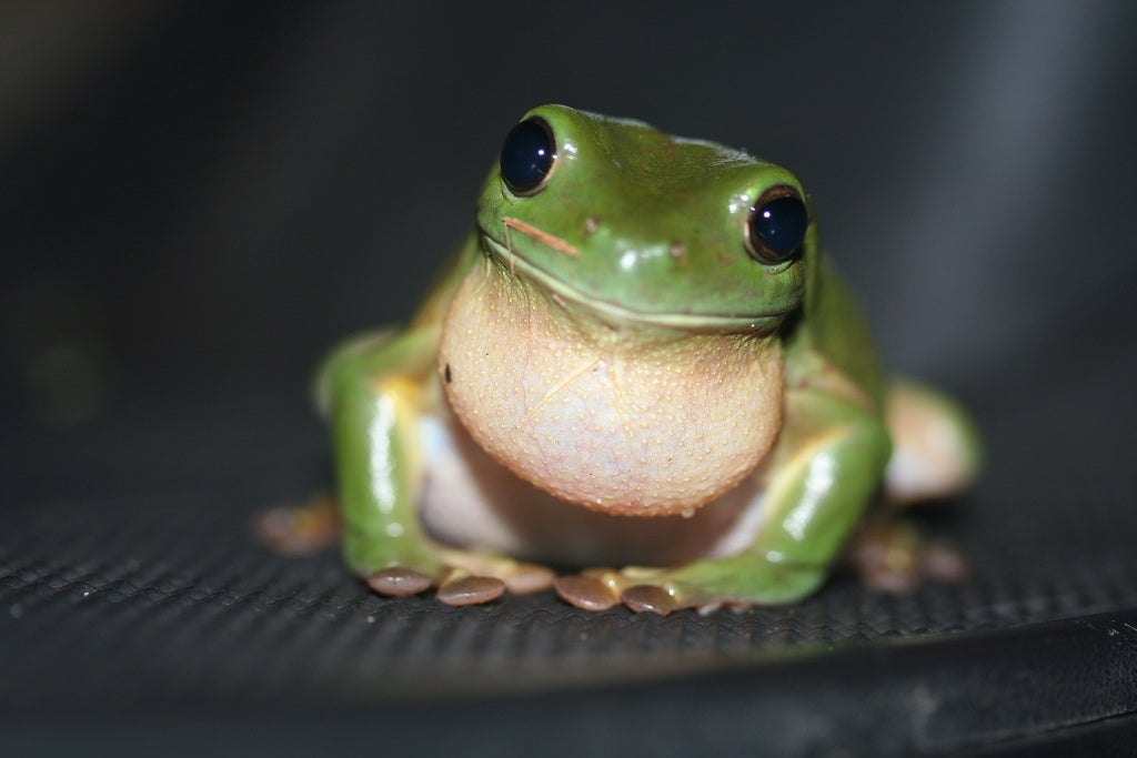 How Do Frogs Jump? [Video]