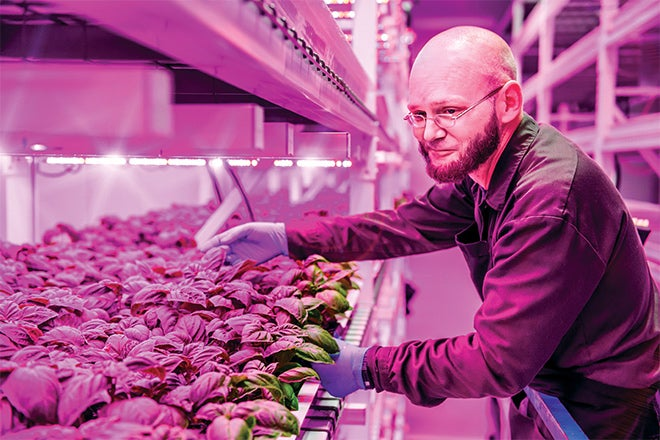 Philips And Green Sense Farms