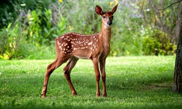 The Case For Killing Bambi