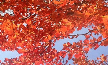 A Guide To Fall Foliage For The Whole U.S. [Infographic]