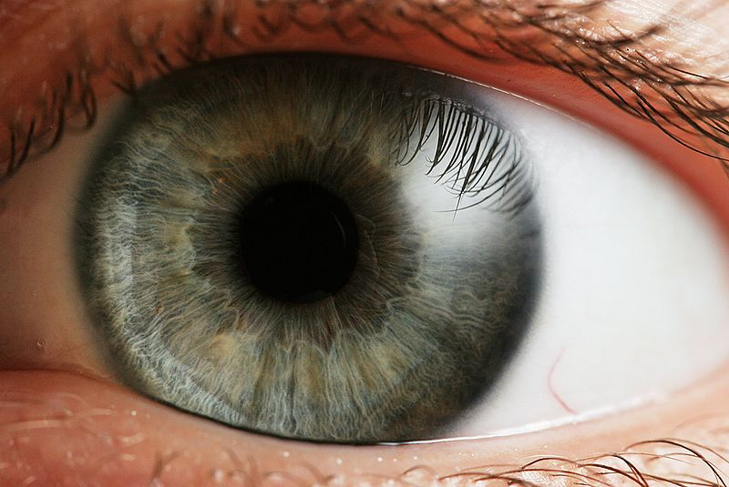 A Company Seeks Ubiquitous Iris Scans On PCs, ATMs and Cell Phones