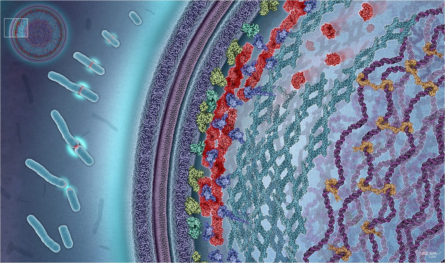 protein molecules arranging themselves to drive the e. coli bacteria to divide