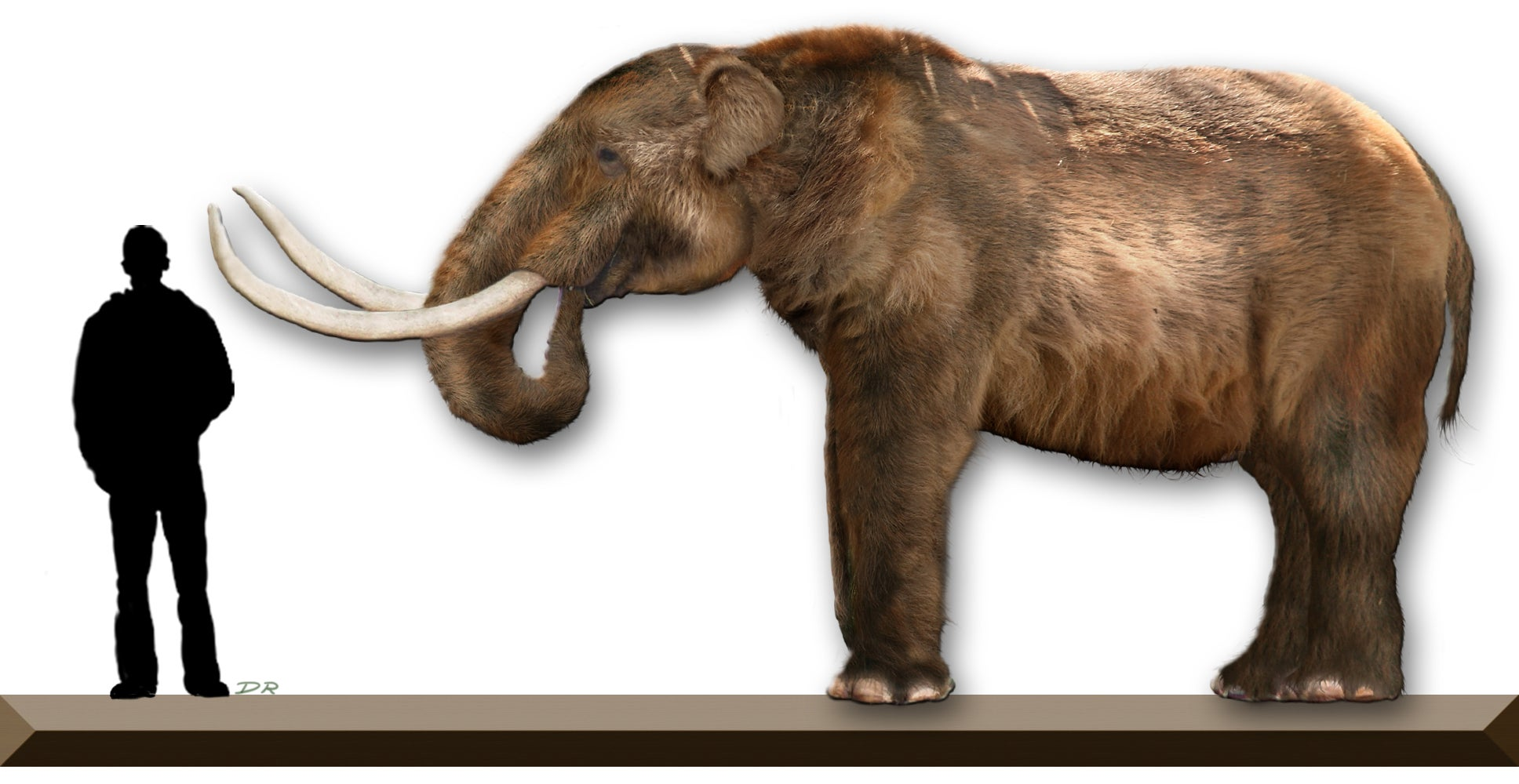 A mastodon carcass could totally rewrite American history—but there's reason to be skeptical
