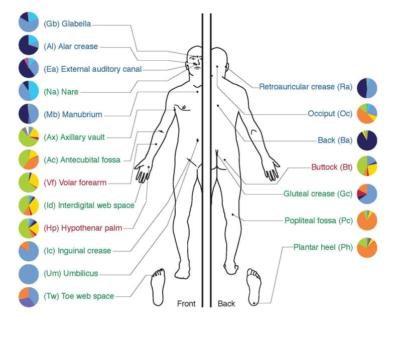 A New Human-Based Ecological Test May Help Keep Patients Safe