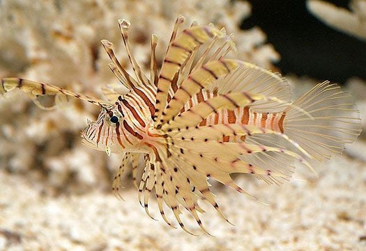 Saving the Seas: Protect Ecosystems by Outlawing Stowaway Creatures (or Just Eating Them)