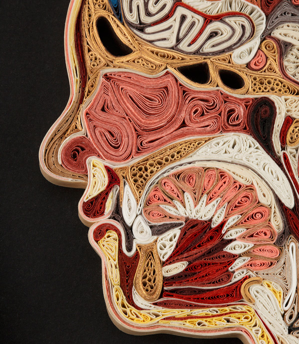 Today in Scientific Papercraft: Anatomical Cross-Sections