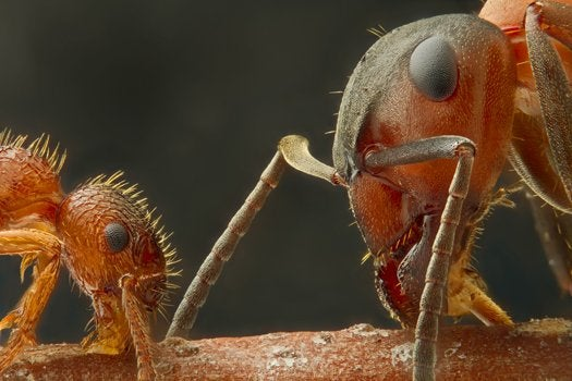 11 Unbelievable Microscopic Images From Nikon's 2012 Small World Competition