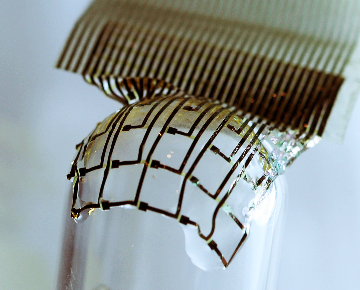 Silicon Shrinkwrap Melts Smoothly Onto Cat Brain to Monitor Activity in Real Time