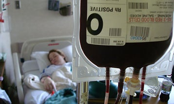 Polymer Cloak Gives Blood Cells Anonymity, Possibly Allowing Universal Transfusions