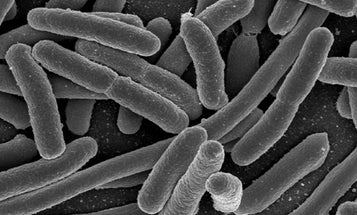 E. Coli Learns to Solve Complex Equations