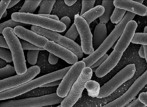 Scientists Teach E. coli Bacteria to Count