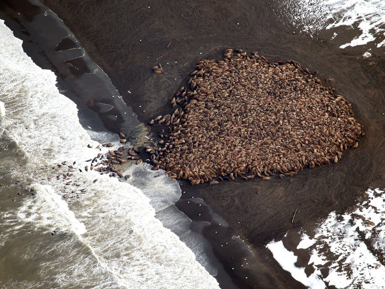 A Legion Of Walruses, Hidden Moon Valleys, And Other Amazing Images Of The Week