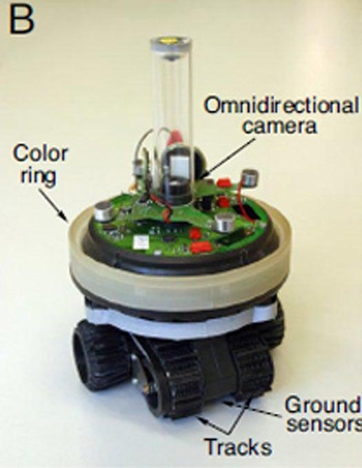 Robots Display Predator-Prey Co-Evolution, Evolve Better Homing Techniques