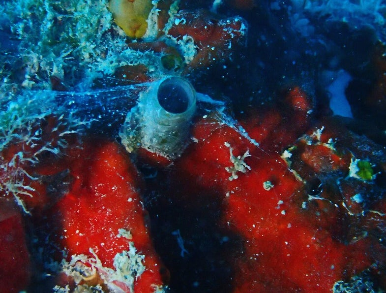"""This """"Spiderman"""" sea snail shoots webs of mucus"""
