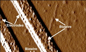 Engineered Bacteria Can Manufacture Nano-Electronics