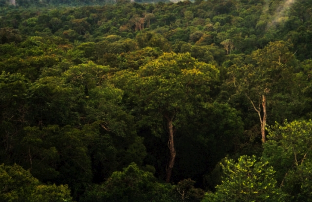 Uncontacted Amazonian Tribe Voluntarily Contacts Scientists, Catches Flu