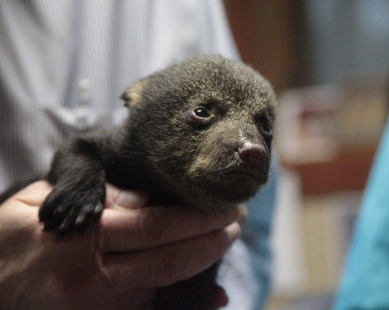 The Bears That Inspired Teddy Bears Are No Longer Endangered