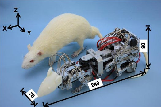 How Do You Depress A Rat? Harass It With A Robot