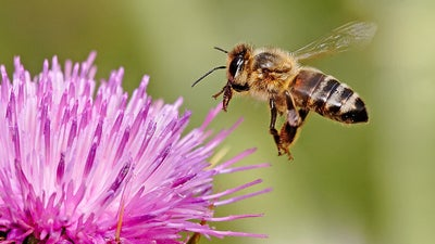 The almond milk craze could be bad news for bees