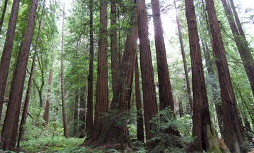 Wi-Fi Radiation Is Killing Trees, New Study Finds