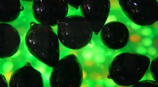 Blood Wars: Museum Exhibit Pits Immune Systems Against Each Other in Biological Battles