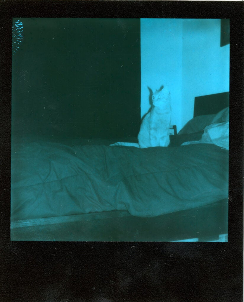 Polaroid Onestep+ sample negative cat