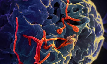 The Month In Plagues: A New Ebola Vaccine, Black Market Therapeutic Parasites, And More