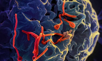 New Ebola Vaccine Shows 100 Percent Effectiveness In Early Tests