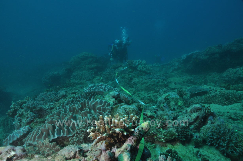 Vast Underwater Survey Identifies Five Keys to Conserving Ocean Life