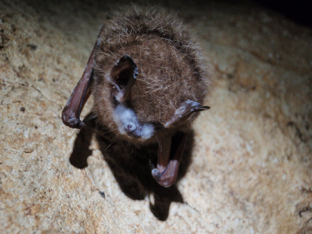 Friday Baturday: Help Fund A Project to Study Bats With UV Light