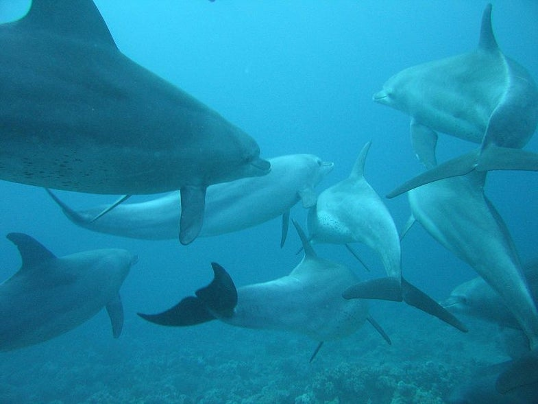 Saving Dolphins With Sonar