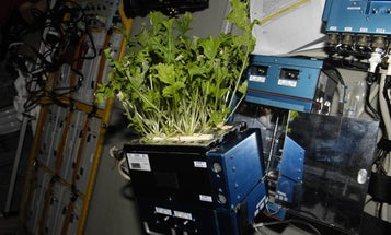How NASA Is Developing Fresh Space Salad