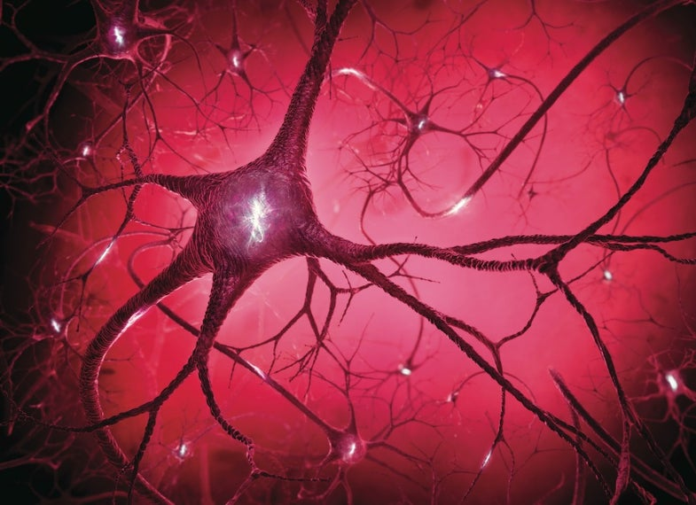 Scientists Discover Brain Activity Beyond A Deep Coma