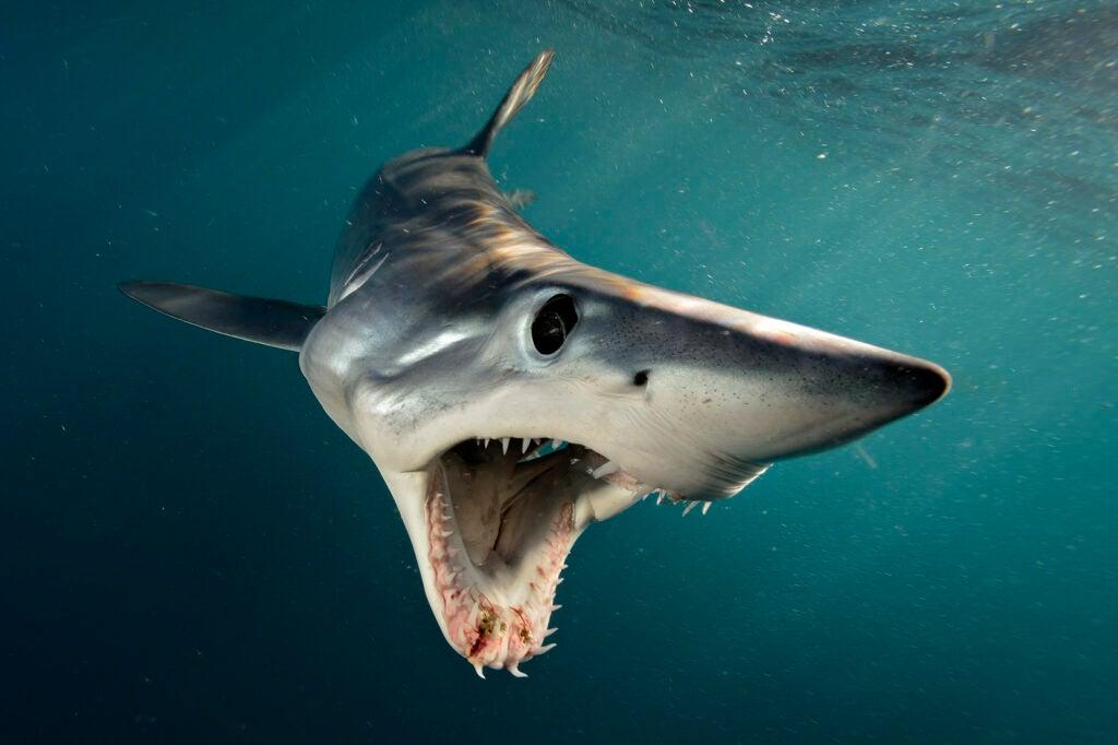 httpswww.popsci.comsitespopsci.comfilesimages201706p142_shark-brian-skerry.jpg