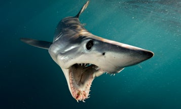 Get up-close and personal with these incredible sharks