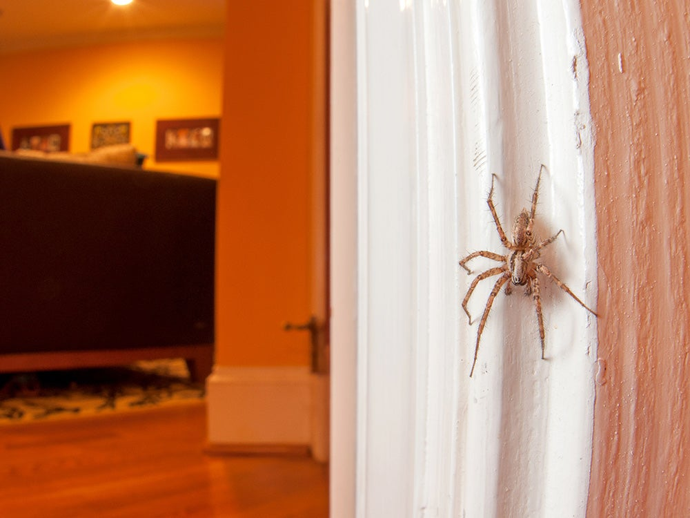 Spiders are secretly great roommates