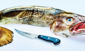 Stop living in fear and buy the whole fish
