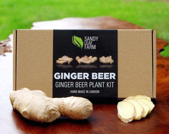 DIY ginger beer