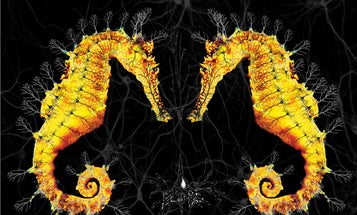 Sea Horses And Neurons Merge In This Clever Graphic Of The Hippocampus