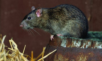 How about this disease-infested rat weather we're having?